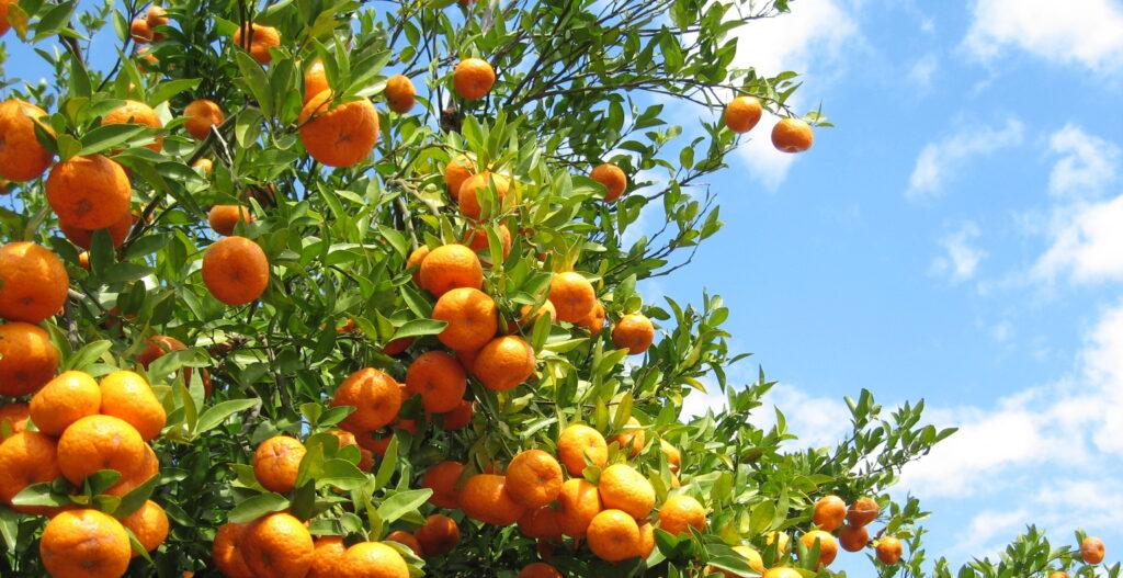 Taller de poda de frutales en La Pebeta