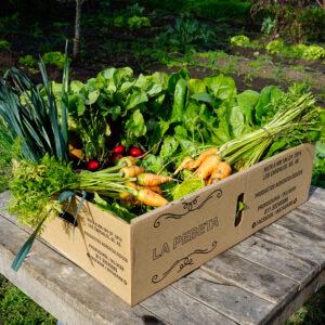 Bolsón de verduras orgánicas