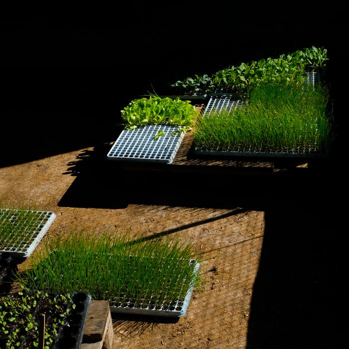 Plantines y esquejes en la huerta de La Pebeta
