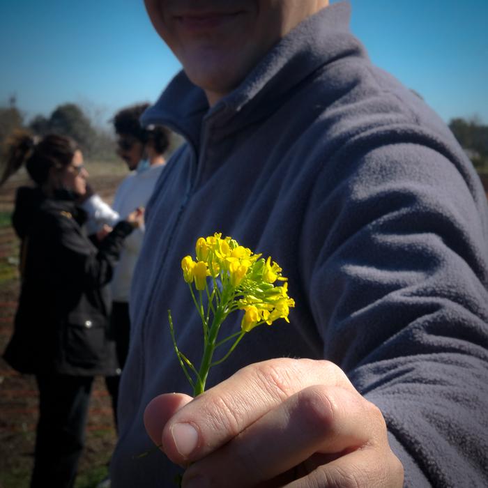 Flores comestibles en la granja de La Pebeta