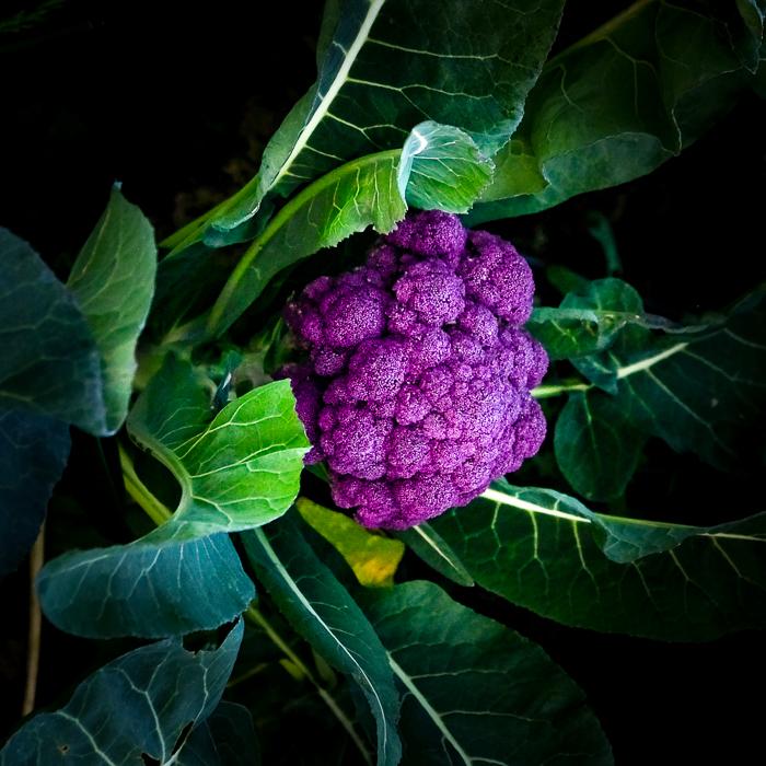 Productos organicos listos para ser cosechados en la huerta de La Pebeta