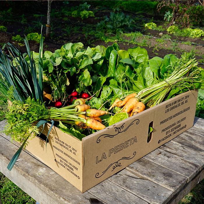 Bolson de verduras orgánicas recién cosechadas